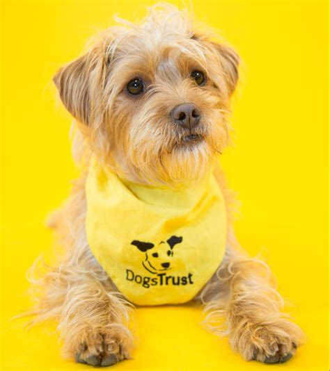 dogs trust dogs trust highlights pathetic excuses give for dumping dogs metro news