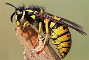 Can T Get Out Of Bed Pictures Of Harmful Insect Bites And Stings From Wasps To