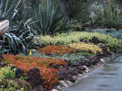 succulent ground cover in colors huntington library desert garden 076 flickr photo sharing