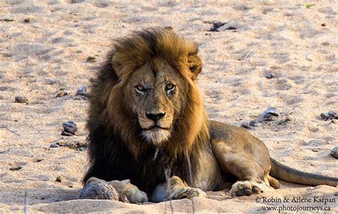 ten   favourite  wildlife    photo journeys