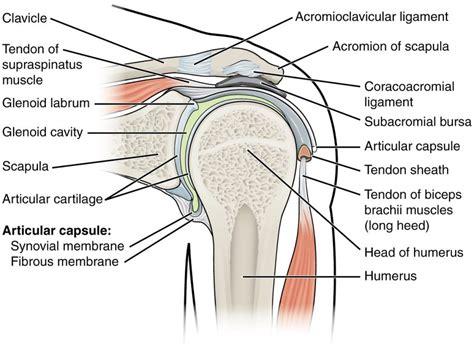 shoulder diagram printable shoulder diagram diagram site