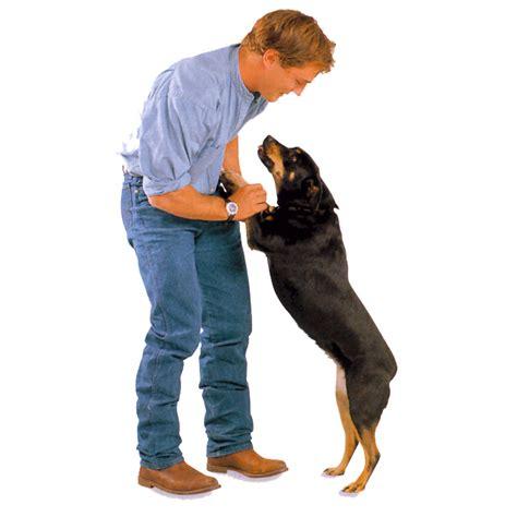 perros con personas 191 por qu 233 saltan los perros pata de perro