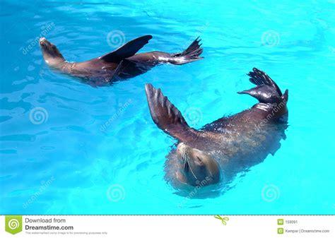 imagenes animales de mar dos animales de mar imagen de archivo imagen 159091