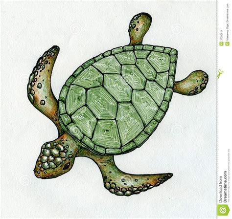 what color are the turtles sea turtle pencil and in color sea turtle