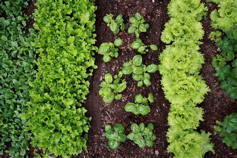 mon potager pr 233 parez votre projet de jardin potager