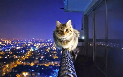 wallpaper cat night rails town night balance cat hd wallpaper