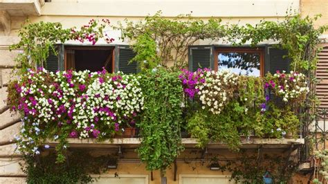piante da terrazza piante da balcone ricanti eccone 5 facili da coltivare