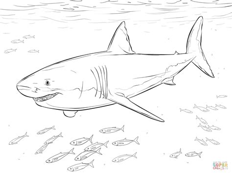 great white shark with pilot fishes coloring page free