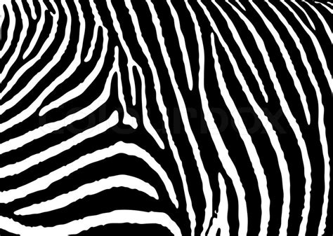black zebra pattern black and white zebra pattern background with simple