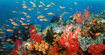 la couleur corail