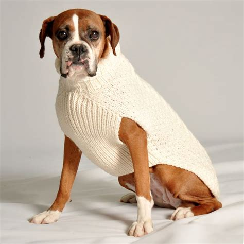 sweater for dogs sweater puppies wallpaper