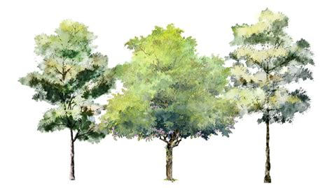water color tree digital watercolor style tutorial eric m sargeant