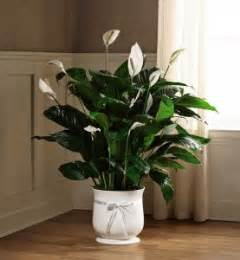 comfort planter 8 quot comfort planter ftd in springfield il flowers by