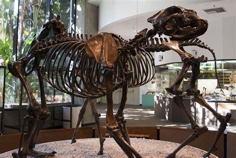 arctodus simus wikispecies