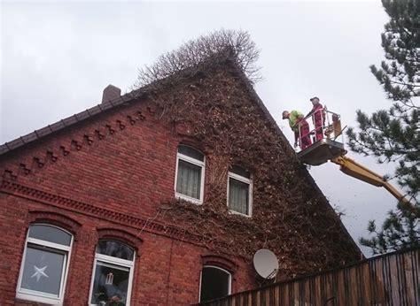 Efeu Am Haus Entfernen by Pflanzarbeiten Und Zaunbau In Alfeld Bei Hildesheim