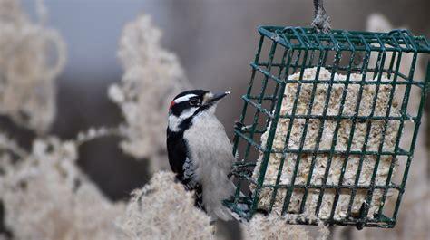 art landers outdoors woodpeckers   kentucky native