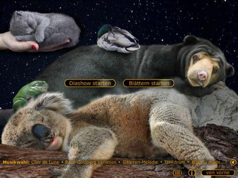 schlaf schön mein schatz bilder f 252 r kinder mit schlaf sch 246 n mein schatz zur ruhe kommen