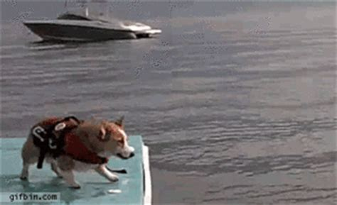 belly boat fails 21 of the funniest dog gifs you will ever see