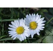 Blumen Fruehling Jpg