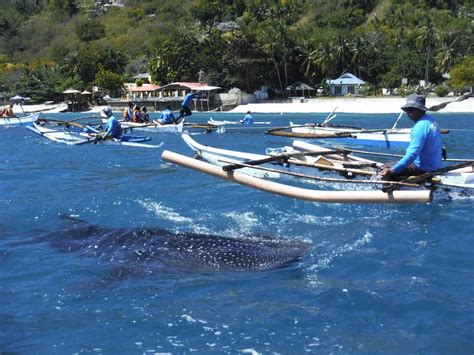 skimming the surface travelling around the world in less than a year for cheap without flying books more of cebu oslob s whale sharks and carcar s lechon