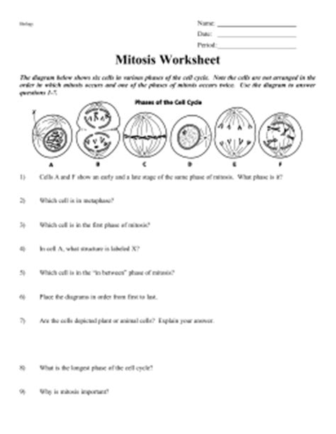 Stages Of Mitosis Worksheet Answers by Phases Of The Cell Cycle Worksheet Answers Mmosguides