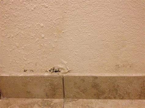 mildew on bathroom walls mold on bathroom wall picture of baymont inn and suites