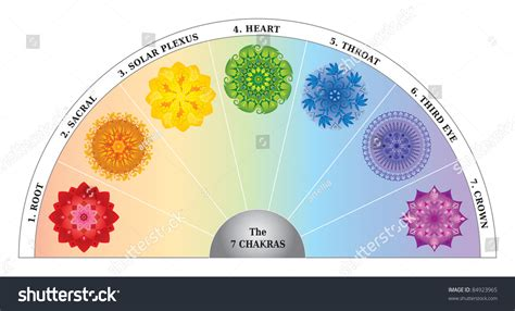 celebrity meaning with exle 7 chakra color chart semicircle mandalas stock vector