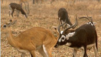 wild animal gif pics  share  animations