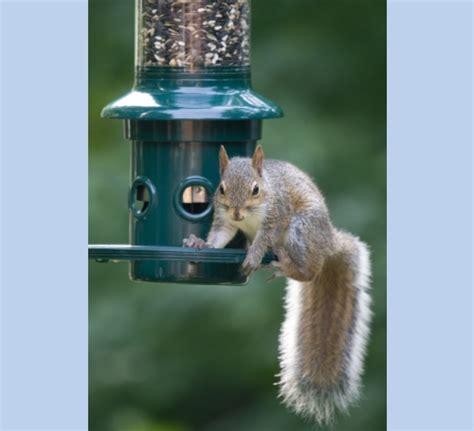 squirrel proof feeder lifetime warranty the bird man