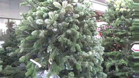 fresh cut christmas tree kingman az tree varieties cut in prescott arizona that stay fresh longer