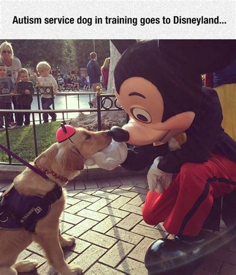 autism service dogs autism service in at disney pictures photos and images for