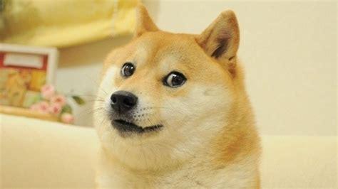 Doge Meme Origin - doge know your meme