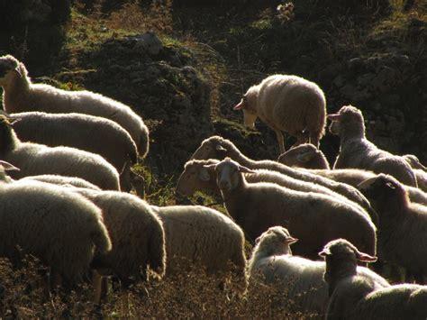 ufficio vaccinazioni roma parco naturale regionale monti simbruini novit 224 al via