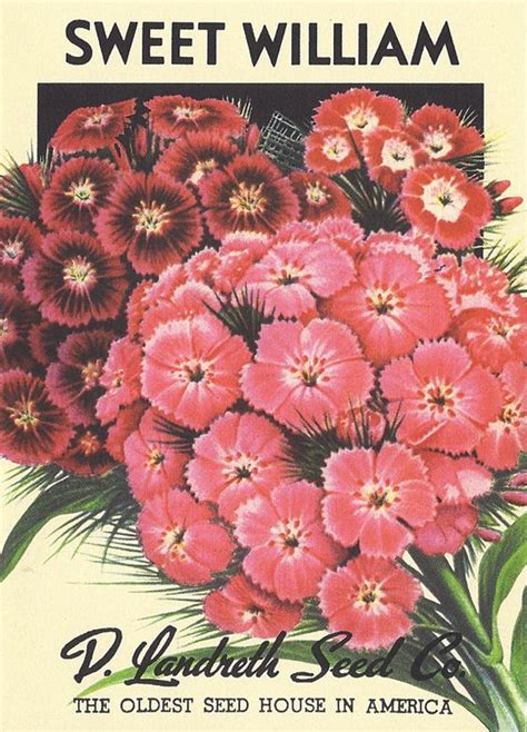 stationery created  vintage seed packets