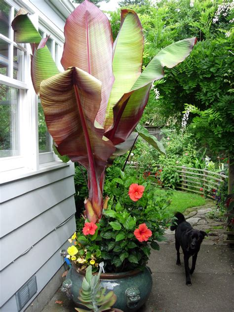 how to keep your semi hardy plants alive through winter