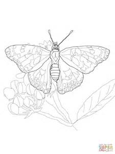 coloring page of painted lady butterfly painted lady butterfly coloring online super coloring