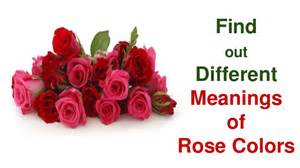 what color of roses find out different meanings of colors