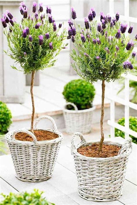 giardino sempre fiorito piante per balconi tutte le soluzioni per un angolo