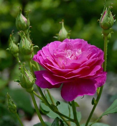 imagenes de flores o rosas mr cosm 233 ticos lingerie artesanato e muito mais o poder