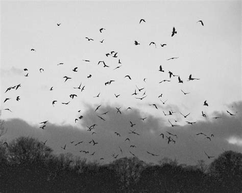 black and white wallpaper with birds bird silhouette wallpapers wallpaper cave