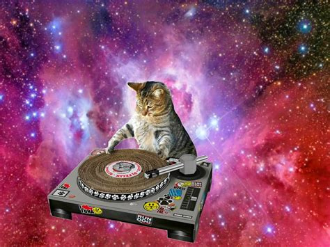Cat In Space caterville cats in space