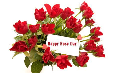 wallpaper flower bucket rose day flower bucket images new hd wallpapers