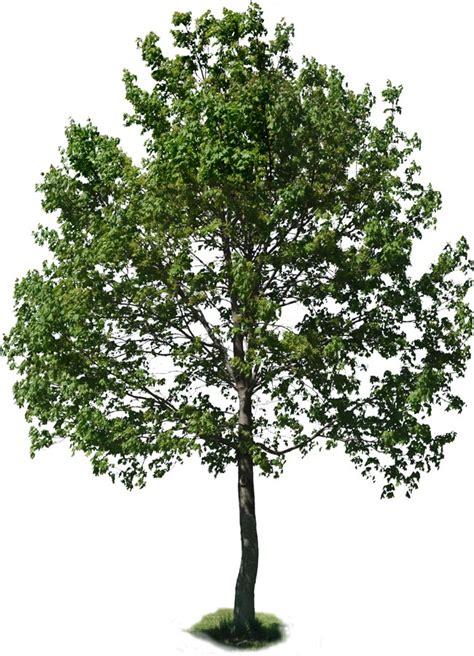 trees images treea03
