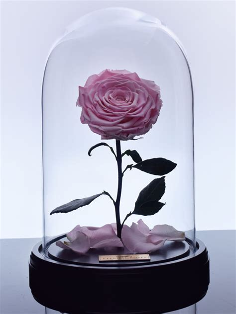 eternal roses the enchanted rose baby pink eternal roses