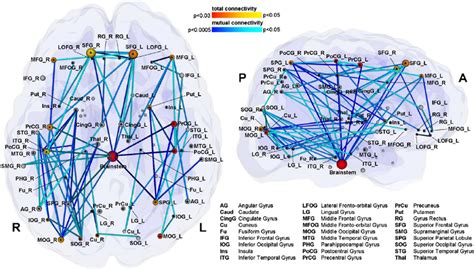 pattern analysis brain inter regional whole brain connectivity analysis reveals a