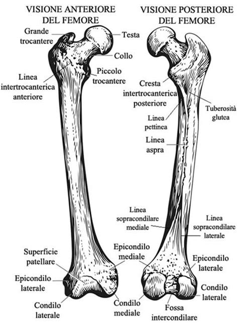 condilo femorale interno femore