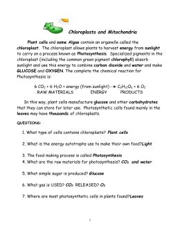 Chloroplasts And Mitochondria Worksheet Answers by Chloroplasts And Mitochondria Chloroplasts What Type Of Cells