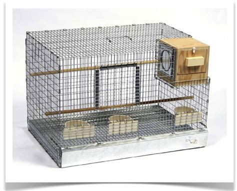 house finch breeding best canary breeding cage 2017 2018 best cars reviews