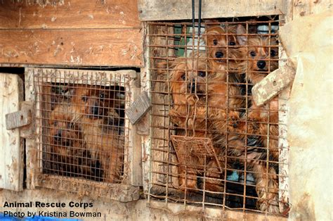 are puppy mills puppy mills animal rescue corps