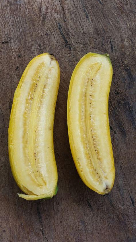 warisan petani tanaman pisang  pokok pisang berangan
